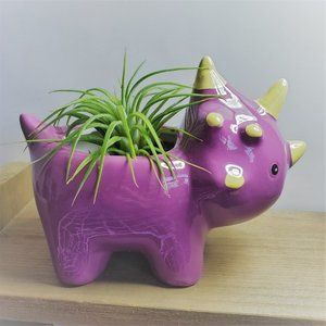Other - Dinosaur Planter with Live Air Plant 5""